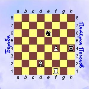 12-шахматы