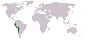 66-империя инков