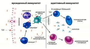 69-иммунитет