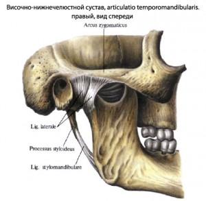 91-челюстной сустав