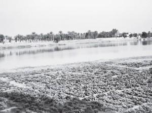 01-1-Река Евфрат в нижнем течении