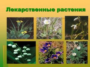 04-2-лекарственные растения