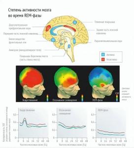 09-3-активность мозга