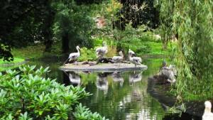 61-зоопарк