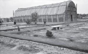 67-1-тростниковый дом